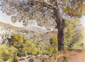 Guajar Alto pines